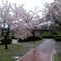 4月11日大学院登園日
