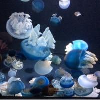加茂水族館でクラゲ三昧!