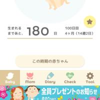 今日で妊娠100日目!
