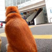 3月22日(水)  細道