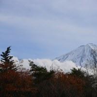 西湖野鳥の森公園からの富士山