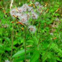 初夏の山里に梅雨間じかとなり植物たちは生きていることを実感しているかな
