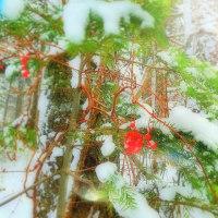 森の中のクリスマスツリー!