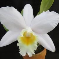 C.交配2種