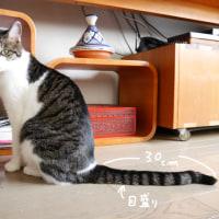 ネコの便利活用術