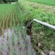 流し水管理