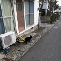 猫だらけ(u_u)