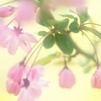 花かいどう (花 4360)