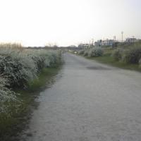 179329 朝の散歩、昼の散歩(48)・・・67、72、76、78,81,83・・・