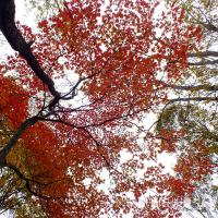 平成28年10月22日(土) に歩いた鹿俣山レポ♪