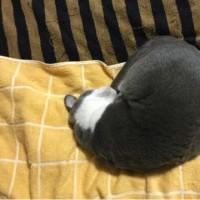 猫の日 2017