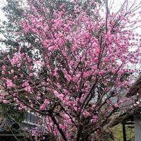 春の休日の朝