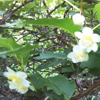 最近撮った初夏の花…