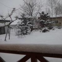 再び大雪・めげずに水汲み