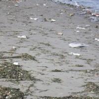 野島 定点観察&海浜清掃