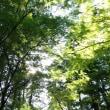 福井の自然