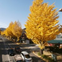 多摩御陵の秋