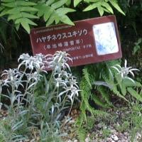箱根湿生花園・その3。