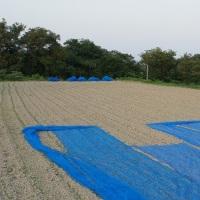 小麦適期刈取指導会