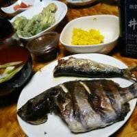 わが家の食卓~シマダイ