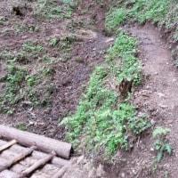 境川 源流への新ルート