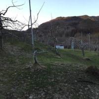 りんご畑でソリ遊び