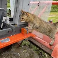 猫のマルも田植えにやってきました