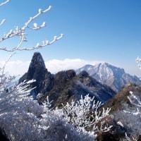 冬の華・冬の花