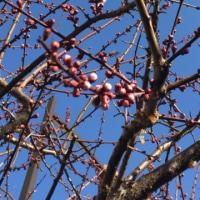 待ち遠しい春が、、、。