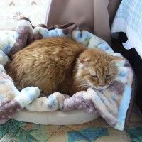 膝とベッド、どっちが暖かい?