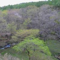カラマツが緑になり、森に新緑が広がって来る。