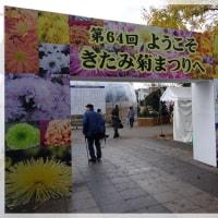 大河ドラマの舞台 北見の菊祭り
