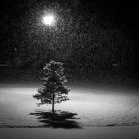 クリスマスの素敵な奇跡