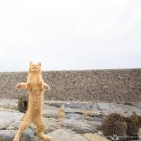 立った〜! クララが立った〜! みたいなネコ @相島のネコたち