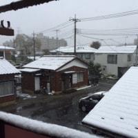54年ぶりだって!・・・東京の初雪
