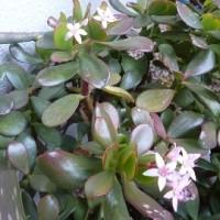 小さなお庭 「 野菜と花 」