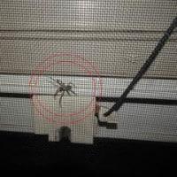小豆ちゃん、蜘蛛に釘付け・・・!