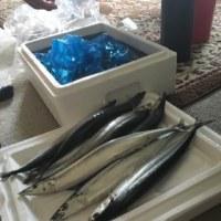 女川の秋刀魚