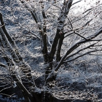 冷たい雨でした・・冬景色