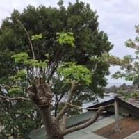 本州最南端 くしもと 南紀鍼灸接骨院 4/29(土・祝)施術予定