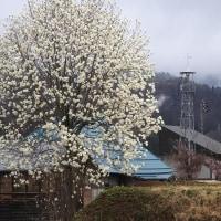 野沢温泉村七ヶ巻の火の見櫓