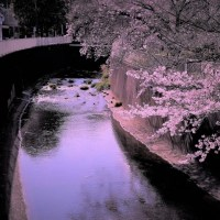 ♪神田川流れる岸辺~