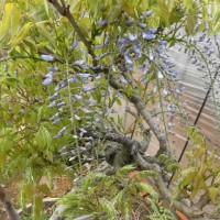 庭の花木他