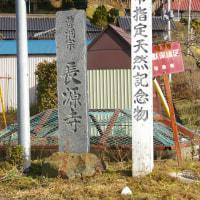 福島県田村市、下大越長源寺の大銀杏です!!