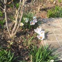 春 その1