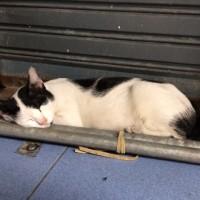猫パンチ☆