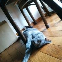 【小梅・さくら通信】猫同士で学ぶこと...