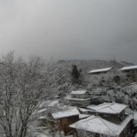 今朝は真っ白。