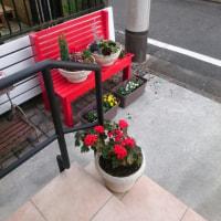 No.1107 ■玄関脇の花が荒らされた!