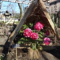 上野牡丹園